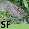 shunokifujoshi userpic