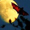 i.: bat