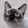 bishifangirl userpic