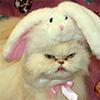 catvalentesucks userpic