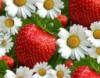 ягода и ромашки