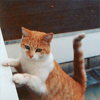 kittiott userpic