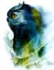 сова синяя