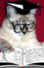 кот читает