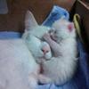 Мама, ребенок, котенок