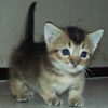 chaseyourdreamz userpic