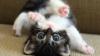 dramajunkie3066: kitten