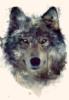 новый волк