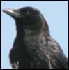 obsidian_crow userpic