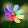 Цветик-восьмицветик