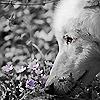 loserandwolves userpic