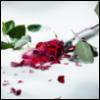 ariel817 userpic