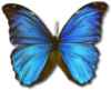 bellanastasia userpic