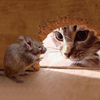 mar_mot2 userpic