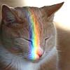 Lady Mondegreen: Cat rainbow
