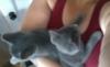 Chance: kittens