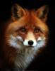 mariyka_fox userpic