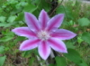 trillium2696 userpic