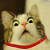 Cat - WTF?!