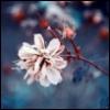 cessalia userpic