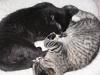 Cat: Celeste and Clooney