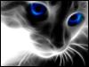 feline-phantasy