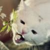 кошка с цветочком