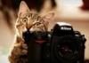 кот с фотокамерой