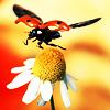 ladybug flies