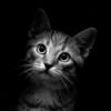 кошачий философ