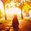 Laura: Cat - autumn