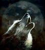 blackmoonank userpic