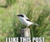 animal bird post