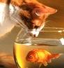 weird_cat userpic