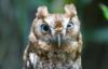 decisiontree userpic