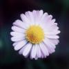 dagakwiat userpic