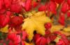 leaves, bud