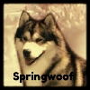 springwoof: White Collar