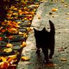 Halloween-black cat