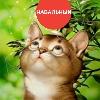 kitty navalny