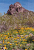 Arizona, Picacho Peak