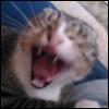 larrybee userpic