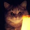 felis_chaos userpic