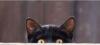 наблюдающий котяра