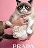 grumpy cat prada
