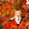 kitten in red