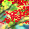 red leaves 1