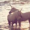 Kiwi Crocus: Fantasy || Unicorn nuzzle.