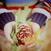 terry: pinecone