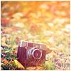 abandoned camera, autumn 2013